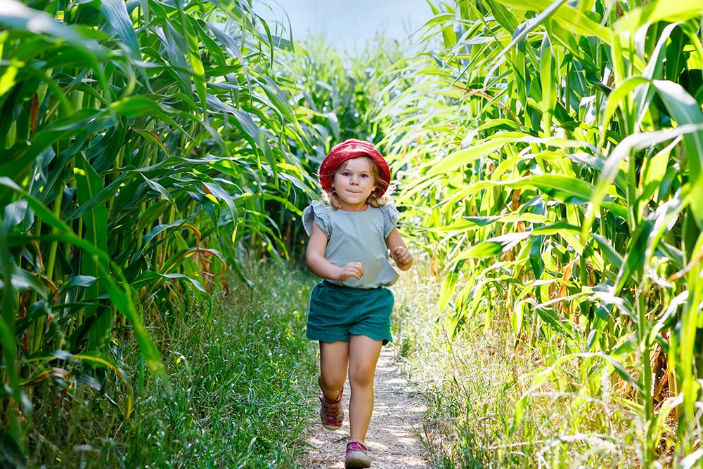Corn Action Header